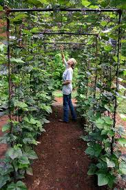 What To Use For Climbing Plants - 22 ways for growing a successful vegetable garden