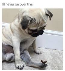 Cute Dog Memes - so cute love pugs and there specialness puppies puppies and