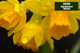 Irises How To Plant Grow by Growing Bamboo In Containers Gardenersworld Com