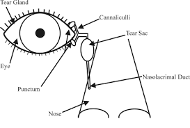 Eye Ducts Anatomy Tear Duct Surgery Eye Consultants Of Pennsylvania Reading Pa