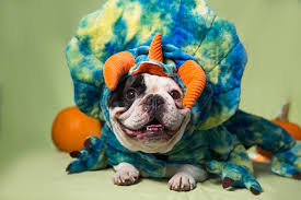 Frenchie Halloween Costume Petsmart Shares Tips Celebrate Halloween Style Pets