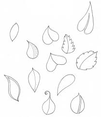 drawn leaves small leaf pencil and in color drawn leaves small leaf