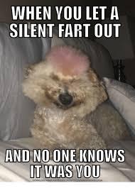 Advice Dog Meme Generator - 25 best memes about imgur meme generator imgur meme generator
