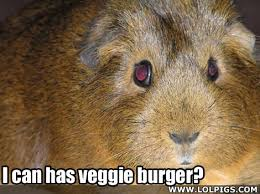 Shaved Guinea Pig Meme - rodents hutch a good life page 16
