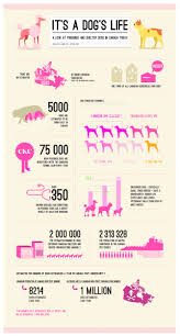 dogs 101 affenpinscher animal planet 22 best animal infographics images on pinterest infographics
