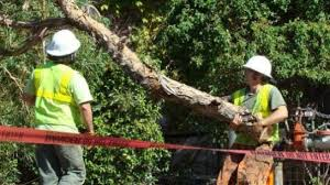 napa county tree service certified