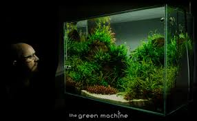 Ada Aquascaping Journals Page 3 Of 7 The Green Machine
