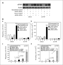 de n acetyl gm3 promotes melanoma cell migration and invasion