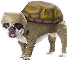 pet halloween costumes uk beachy halloween costumes for your pooch inspire reef