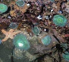 103 best tide pools images on pinterest tide pools starfish and