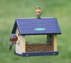 plan42 amazing bluebird feeder plan 42 bluebird jail feeder plans