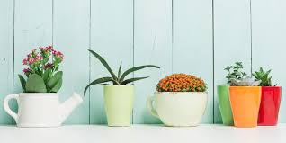 indoor plant 25 easy houseplants easy to care for indoor plants