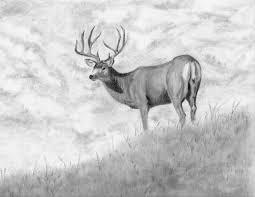 mule deer buck completed wetcanvas