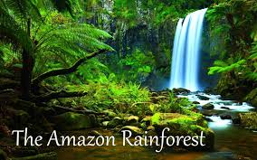 Under Canopy Rainforest by The Amazon Rainforest Facts Hd Youtube