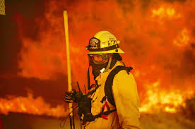 California Wildfire Animal Rescue by California Wildfire Burns With Ferocity Never Seen By Fire Crews