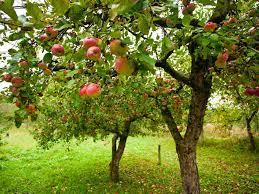 fruit tree donation