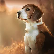dog wallpapers dog wallpapers backgrounds pro home screen maker with cute