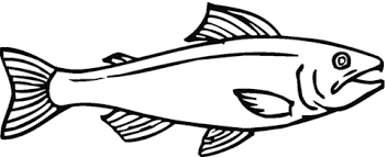 salmon fish coloring page salmon 12 coloring page free printable coloring pages