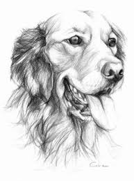 quick graphite sketch of a labrador puppy drawing pinterest