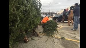white house christmas tree to be selected from shawano tree farm