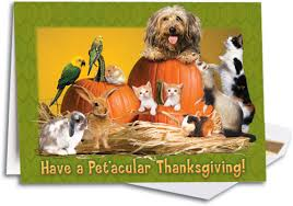 thanksgiving folding cards smartpractice veterinary
