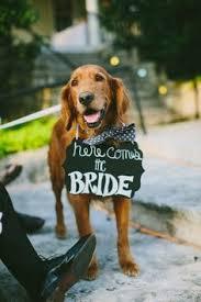 urban dog ring holder images 38 best wedding dogs images wedding stuff dream jpg