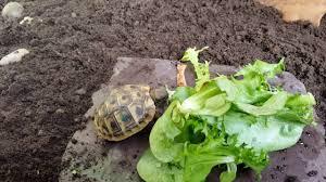 Tortoise Bedding New Soil And Happier Tortoises Youtube