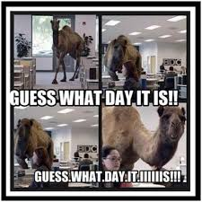 Hump Day Camel Meme - guess what day it is funny camel meme