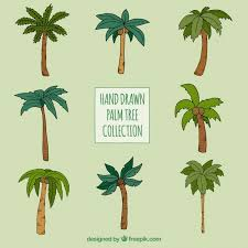 palm trees set of different types vector free