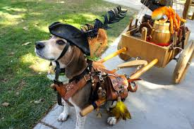 best pet halloween costume contest sponsored by conejo valley