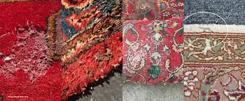Rug Bugs Moths Carpet Beetles And Silverfish Protecting Rugs From Bugs