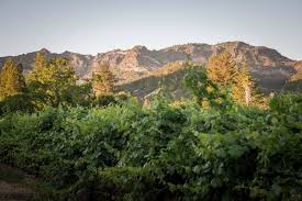 bennett lane winery calistoga napa valley california