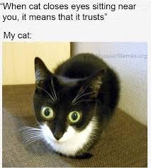 Trust Memes - when cat doesn t trust you russian memes
