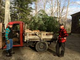 christmas tree delivery oh christmas tree polly s follies