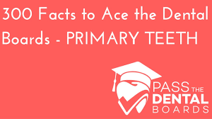 300 dental anatomy facts part 1 primary deciduous dentition
