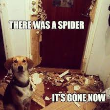 Funny Spider Meme Pictures To - spiders care and feeding of your roommates the bis key chronicles