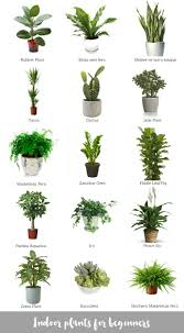 plant modern tall indoor plants potted plant tropical assorted