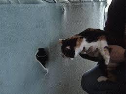 gatti divani gatto ritrovato dentro un divano di seconda mano l arresto