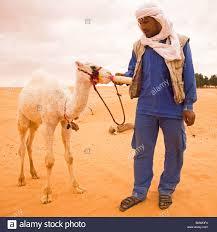 camel milk stock photos u0026 camel milk stock images alamy