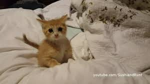 Kitten Bed Orange Kitten Ramsay Plays On The Bed And More Youtube
