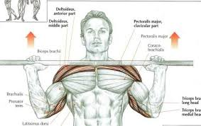 What Is An Incline Bench Press My Shoulders Get Exhausted Before Chest While Doing Chest Exercise
