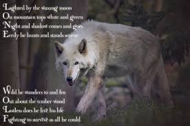Lone Wolf Meme - lone wolf wallpaper wallpapers browse