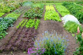 permaculture courses permaculture gardening from seed to table