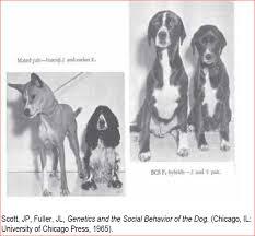 bluetick coonhound genetics geoffreymarsh com bluetick rottie