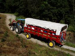 take a wagon ride to a christmas tree farm www mountainsofnc com