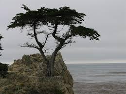 trees trees caitlynnmarsh