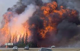 Canada Wildfires by Climate Change Bringing Larger Forest Fires More Bugs Diseases