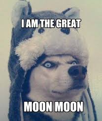 Moon Moon Memes - best 25 moon moon memes ideas on pinterest funny jokes with