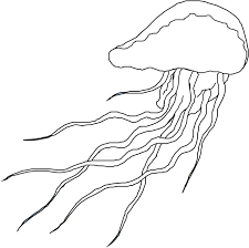 size 1280x960 seahorse coloring pages jellyfish coloring pages