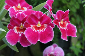 pink orchids bright pink orchids by casper1830 on deviantart
